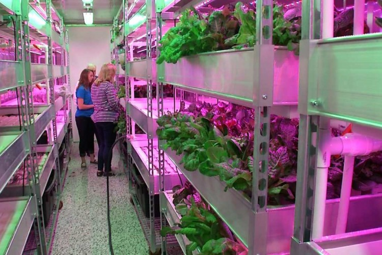 Voedselbank gebruikt zeecontainers om voedsel te verbouwen